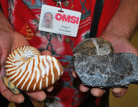 Comparison of modern nautilus and Triassic nautloid