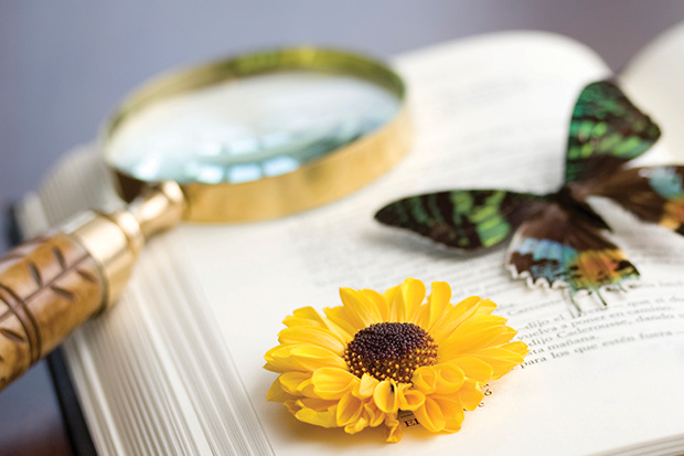 Magnifying glass with flower and butterfly