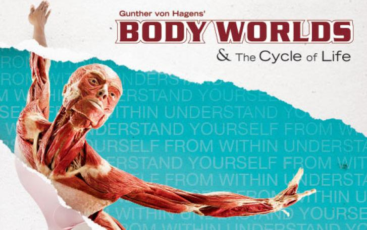 Body Worlds and The Cycle of Life Plastinate
