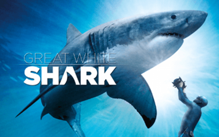 Great White Shark poster image
