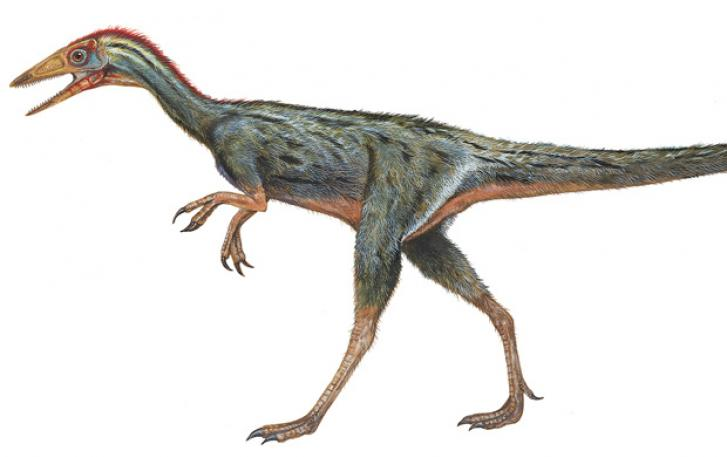 Illustration of small feathered dinosaur