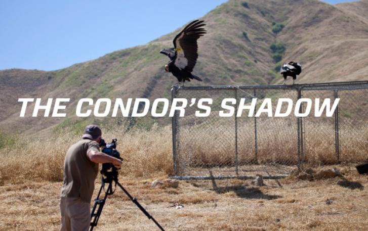 The Condor's Shadow poster image