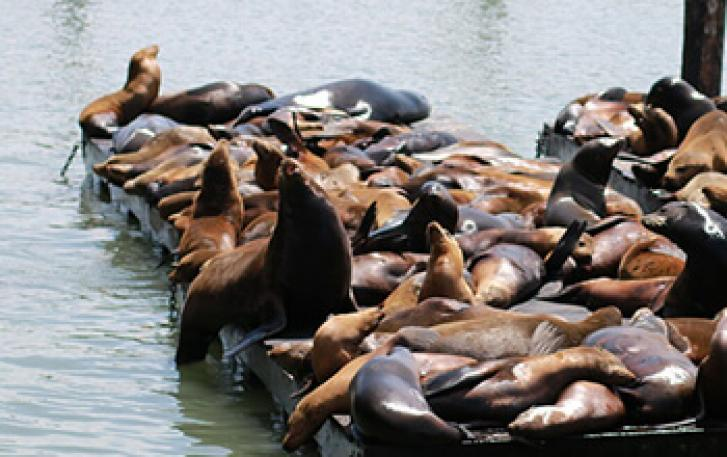 Sea lions lounging on docks in Newport, Oregon