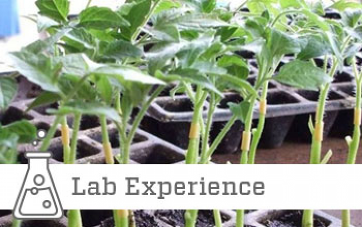 The Craft of Grafting lab experience image
