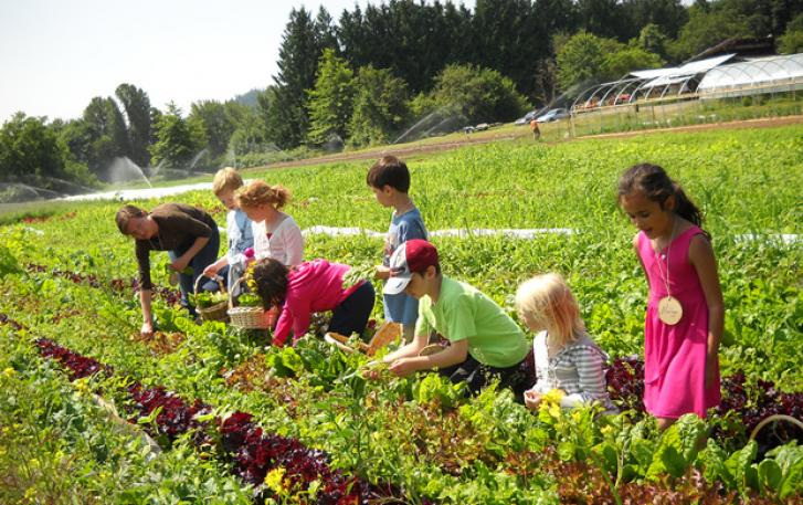 Students pick fresh greens at Zenger Farm