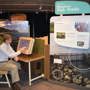 Visitor with 'Hawaiian Fish Ponds' interactive